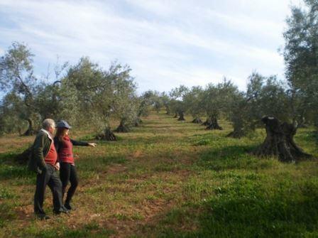 Aceite de oliva virgen extra en Marbella